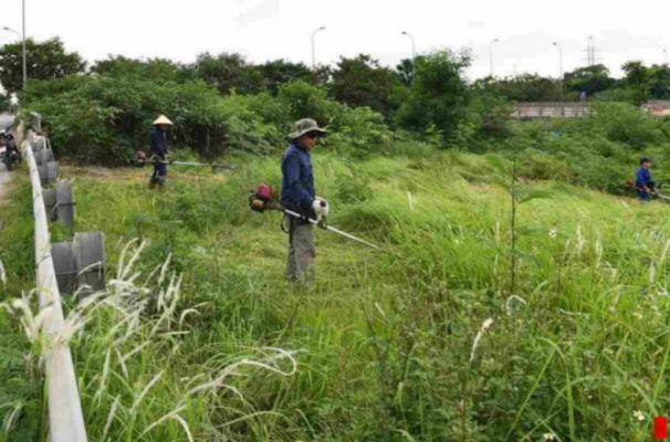 Dịch vụ cắt cỏ tphcm