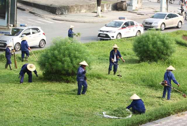 Dịch vụ cắt cỏ khuôn viên
