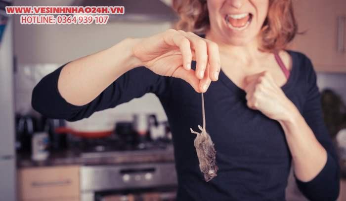 18 mẹo đuổi chuột ra khỏi nhà siêu hiệu quả